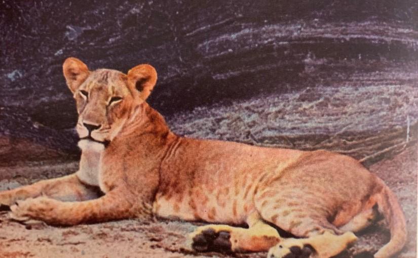 Elipä kerran leijona jakarhu